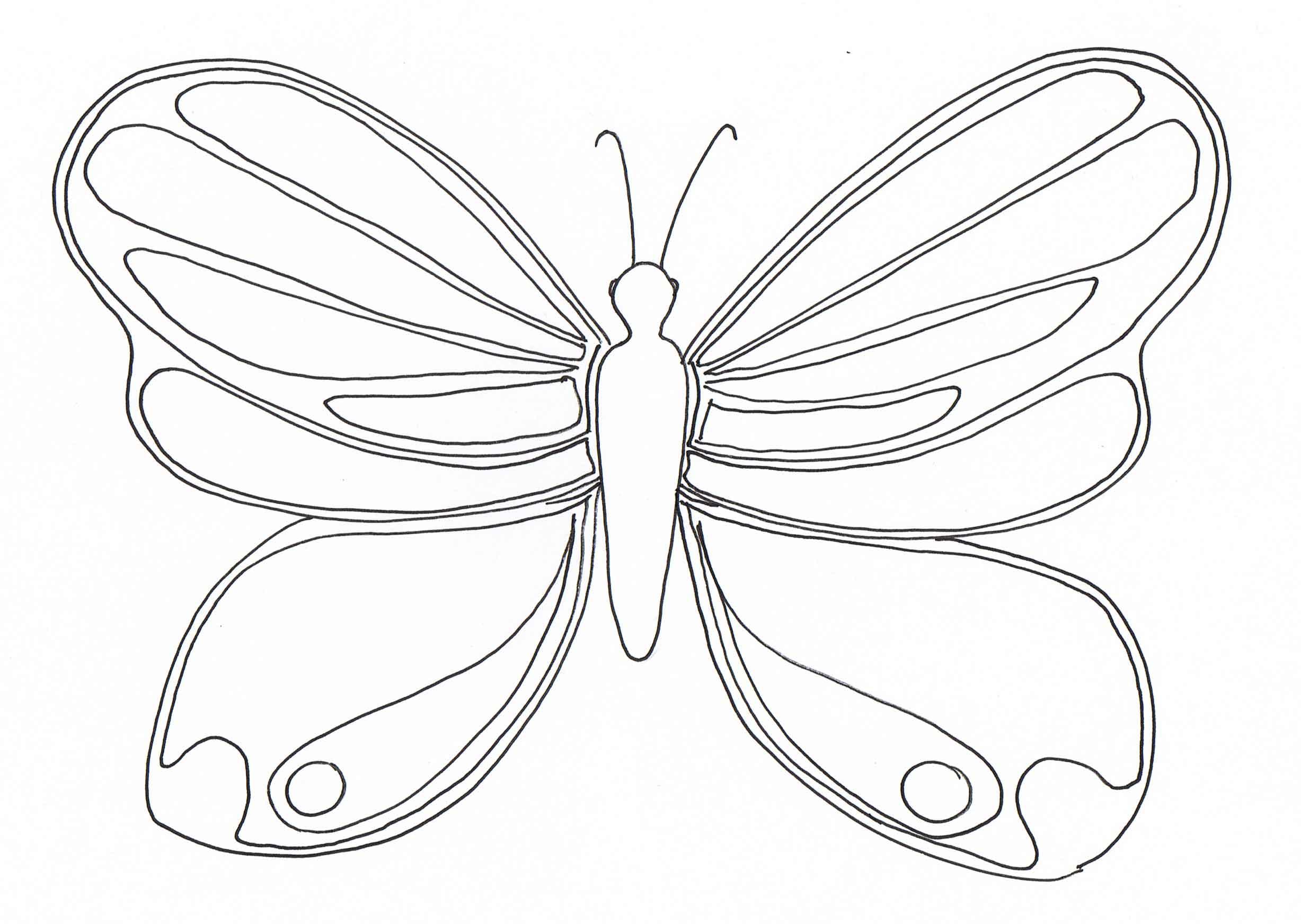Comment faire un papillon en dessin - Papillon coloriage ...